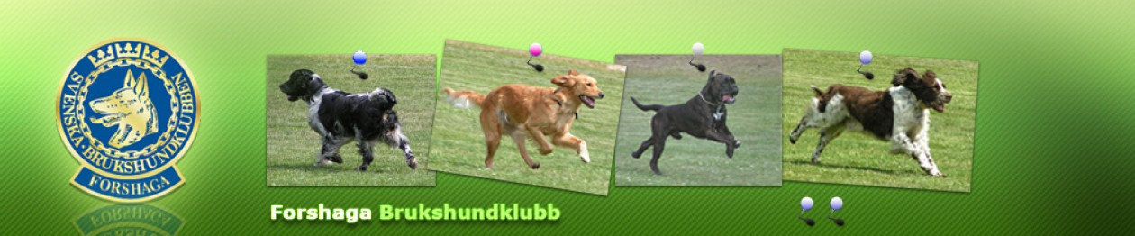 Forshaga Brukhundklubb